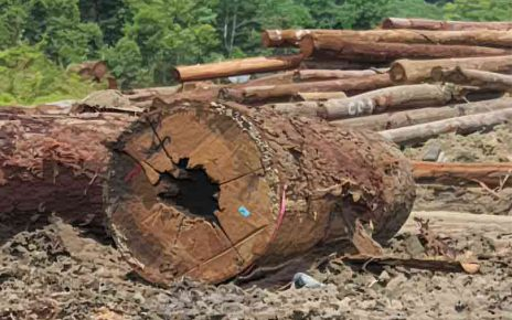 Sustainable Logging